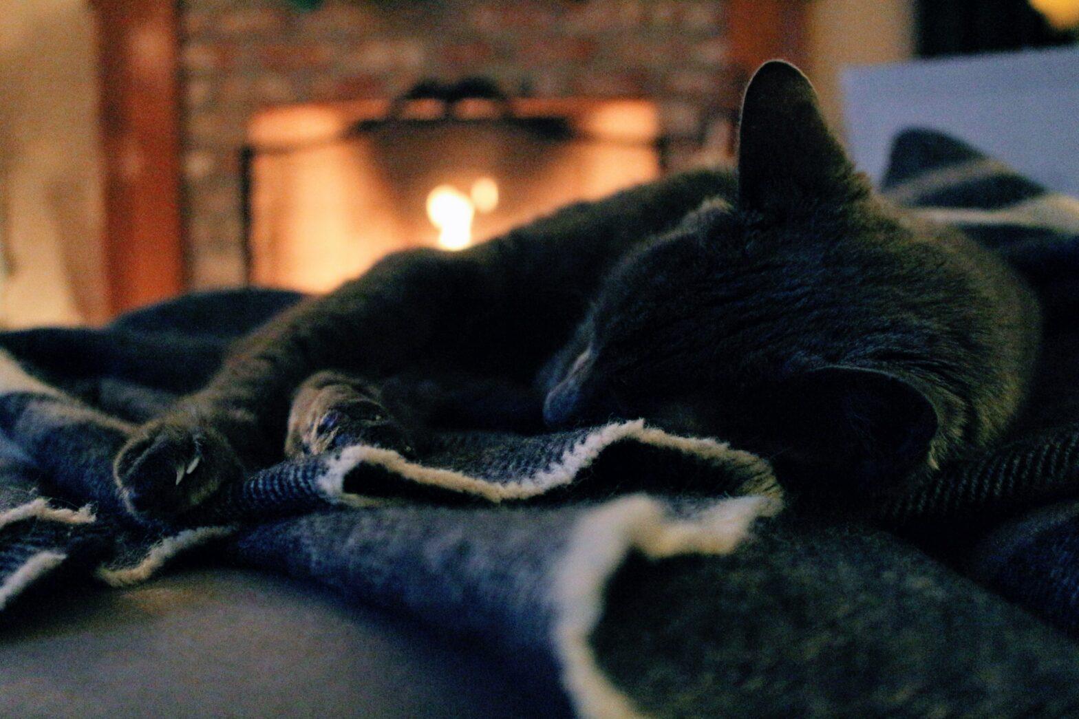 Pellettitakat tarjoavat ekologisen vaihtoehdon kodin lämmitykseen.